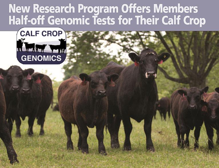 Calf Crop Genomics